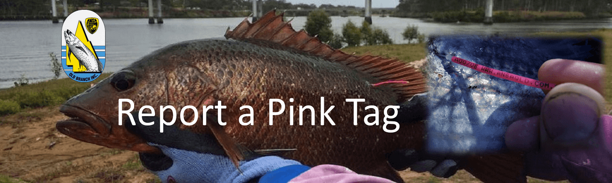 REPORT RECAPTURE - FISH WITH A PINK TAG
